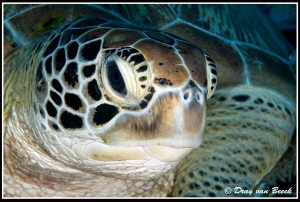 turtle portrait by Dray Van Beeck 